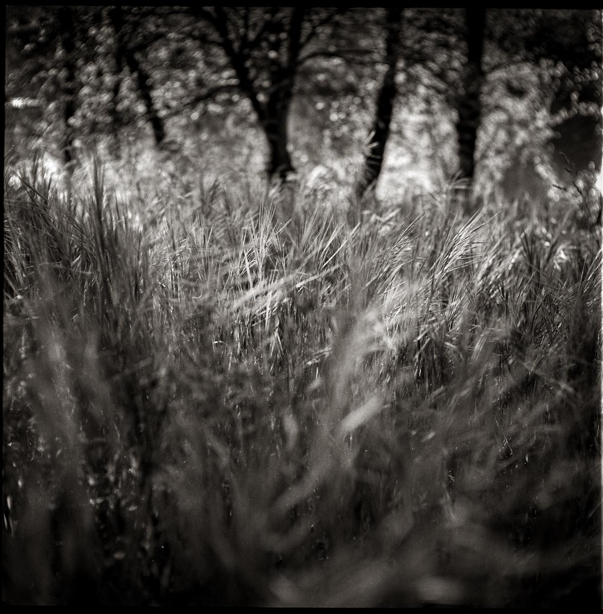 angel Sotelo fotografo (6)